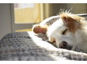 Jak zbudować budę dla psa? Czyli buda z palet