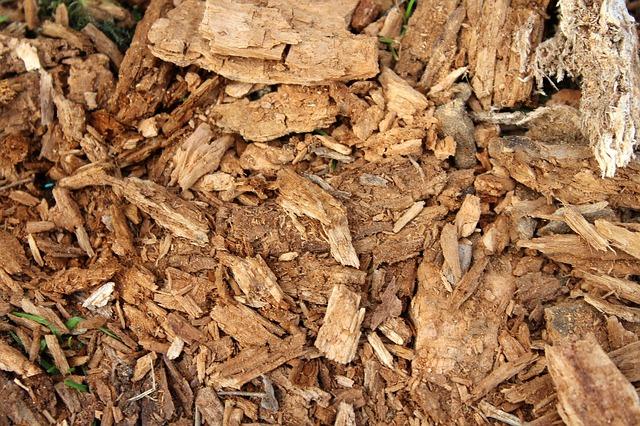 Spruchniałe drewno