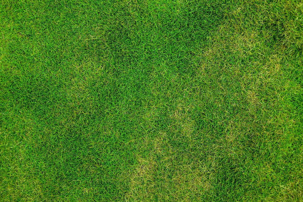 koszenie trawy cennik